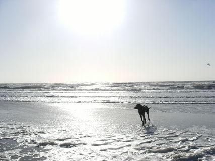 FOTKA - Koupající psík