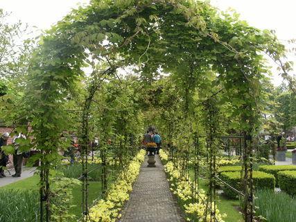 FOTKA - zelená brána
