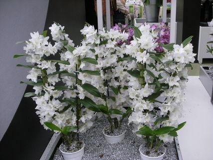 FOTKA - mám ráda orchideje