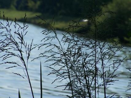 FOTKA - Rákosí u řeky