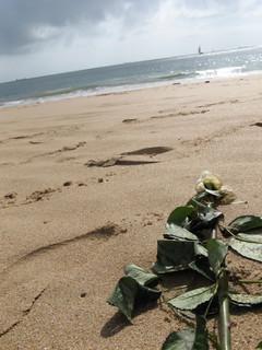 FOTKA - Růže na pláži