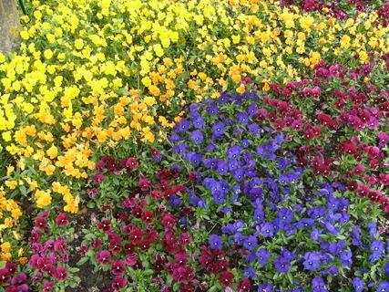 FOTKA - květinový koberec 2