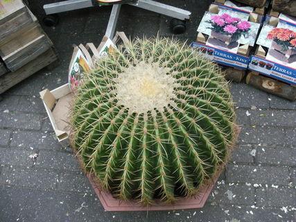 FOTKA - takový malinký kaktusek
