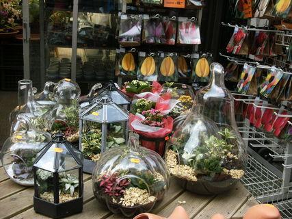 FOTKA - květinový trh 2