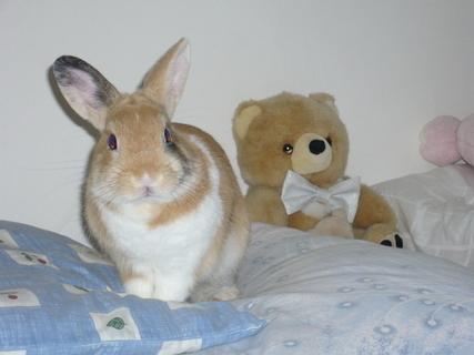 FOTKA - králík Otík