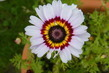 Květ 1
