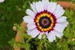 Květ 2