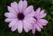 Květ 4