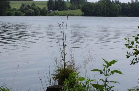 FOTKA - rybník,,