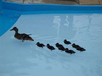 FOTKA - Kačenky v bazénu :o))