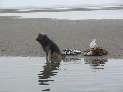 FOTKA - Mokrý pes