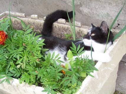 FOTKA - Kotě v kytkách