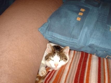 FOTKA - Naša  pohodlná kočička Nelly.