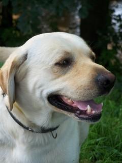 FOTKA - Usm�vaj�c� se pes Monty-kamar�d�
