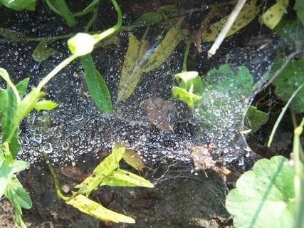 FOTKA - Kapky rosy v pavučině