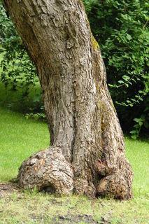 FOTKA - Kmen stromu 1