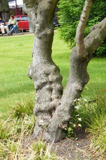 FOTKA - Kmen stromu 2