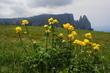 květy a hory