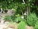 Ve stínu kiwi