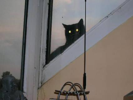 FOTKA - sousedčina kočka zase šmíruje.