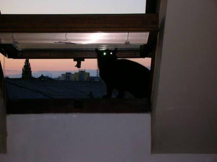 FOTKA - Sousedčina kočka přišla na kontrolu