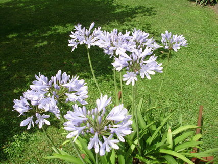 FOTKA - Modrá krása