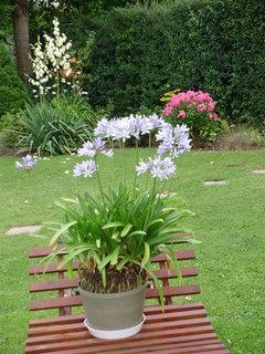 FOTKA - Zahrada kamarádky zahradnice