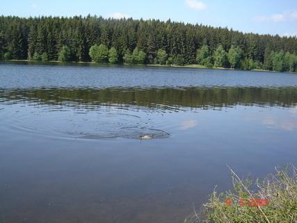 FOTKA - Domanínský rybník.....