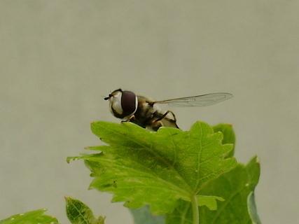 FOTKA - hmyz.