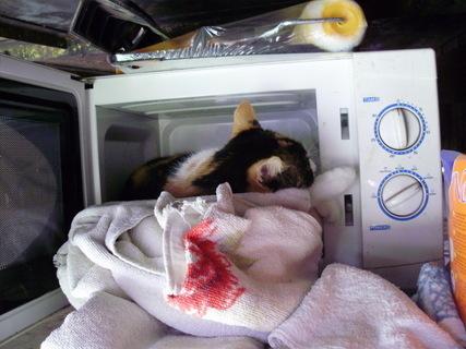 FOTKA - Celý den vydržela spát v rozpálené mikrovlnce