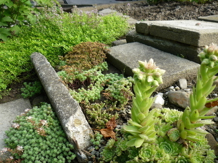 FOTKA - moje zahrada