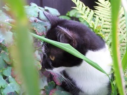 FOTKA - Čekám na myšku