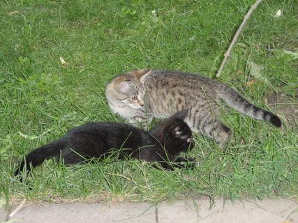 FOTKA - Koťata číhají