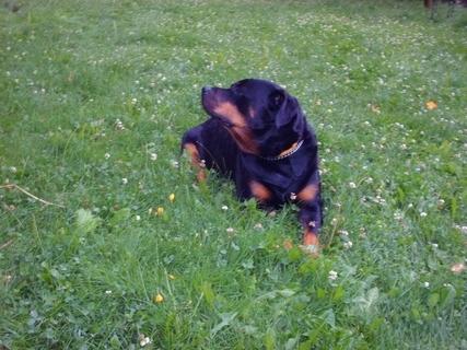 FOTKA - Roxy po bouřce  se chladí na mokré travě,23.7.2009.