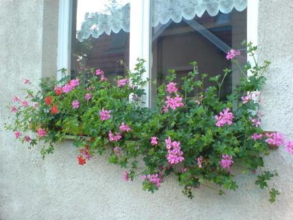 FOTKA - okno s muškáty