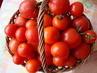 ze zahrádky - rajčata