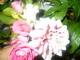 Růženka s Jiřinkou