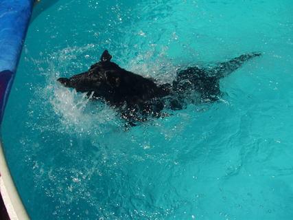 FOTKA - Maxík rád plave