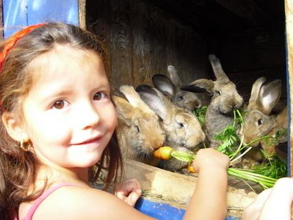FOTKA - králičci musí také papat