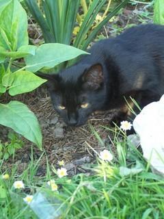FOTKA - Kačenka na lovu myšek