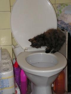 FOTKA - naše kotě