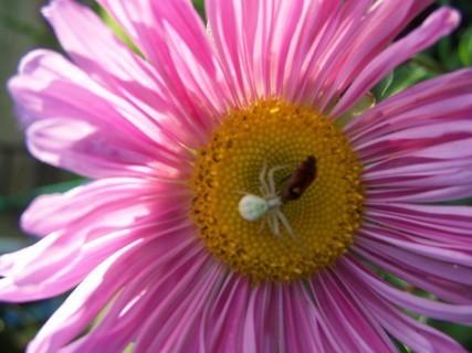 FOTKA - Pavouček s broučkem na kytičce