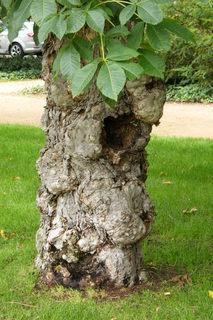 FOTKA - Kmen stromu 3