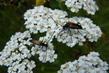 Hmyz na řebříčku 4