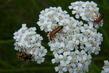 Hmyz na řebříčku 5