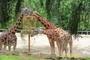Žirafí svačina - ZOO Zlín - Lešná