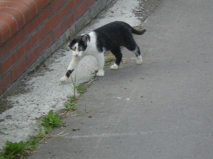FOTKA - potkali jsme kočku