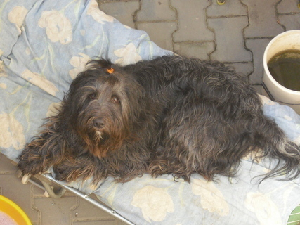 FOTKA - Čertík - náš pes