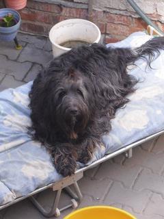 FOTKA - náš pes Čertík