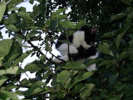 FOTKA - Boženka ve stromě